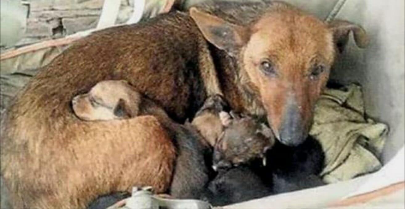 A auzit ceva sub geamul casei, era un câine cu puii lui, dar când s-a uitat mai bine printre căței a văzut ceva extraordinar. Un pumn micuț ieșea din blană. Ce s-a întâmplat e nemaipomenit. Cazul a surprins o lume întreagă