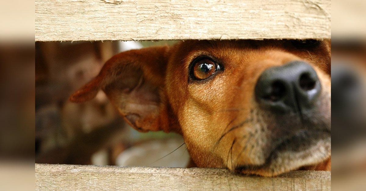 Lege care interzice animalelor de companie să fie lăsate în afara casei noaptea